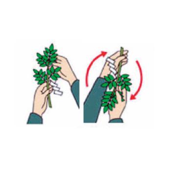 根もとを左手に持ち替え、右手で葉先を持ち半回転させる。